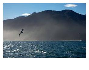 mountain lake bird