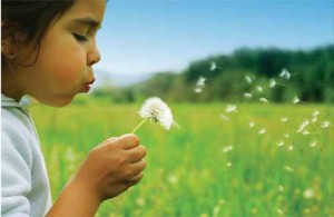 Acupuncture Helps Relieve Allergy Symptoms - Visit our office in Wilton, Bethel or Fairfield, CT