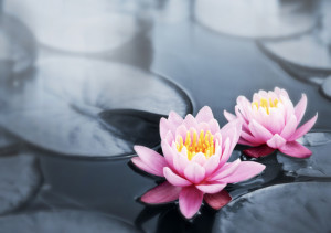 Acupuncture - gentle treatment for the delicate flower that you are!